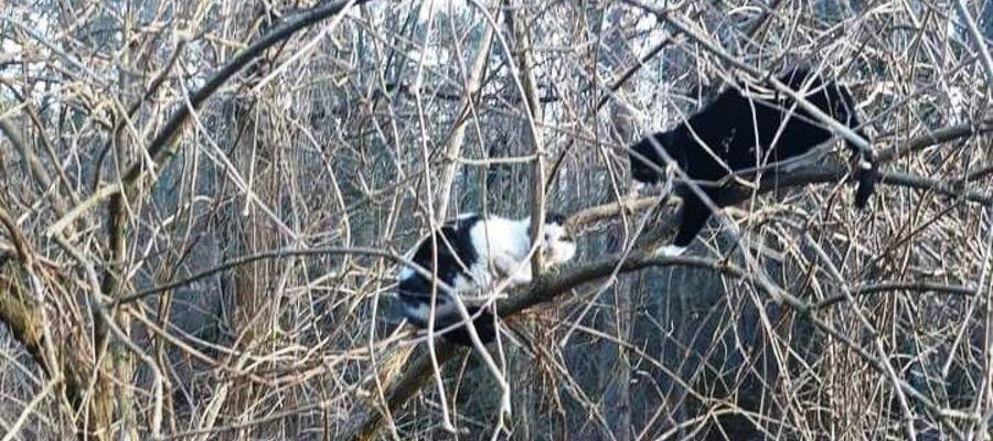 Kotki na drzewie