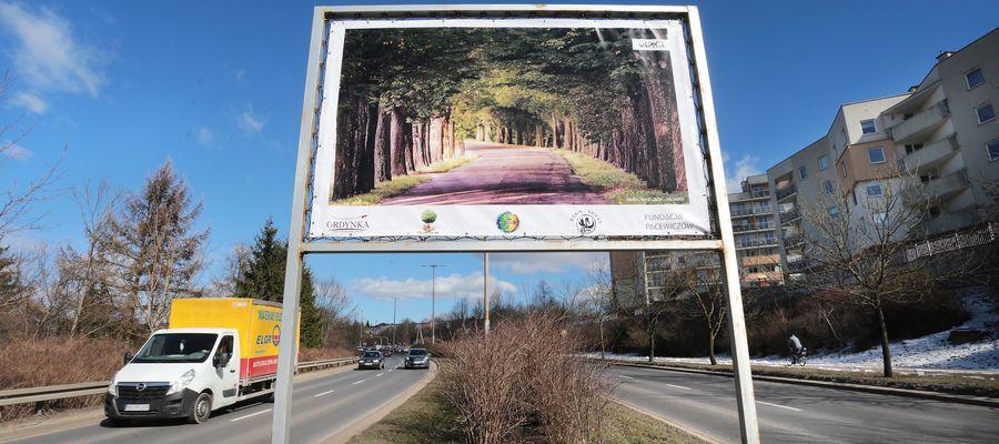 Kilka billboardów z fotografiami drzew pojawiło się przy ulicy Synów Pułku