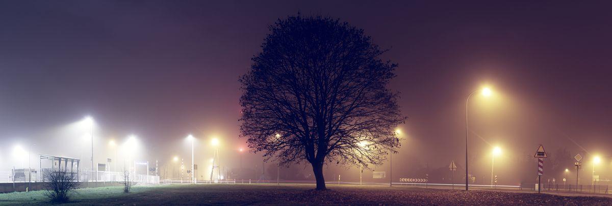 Drzewo przy drodze - Biała Piska
