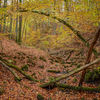 Od soboty będziemy mogli zanocować w lesie