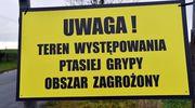 Ptasia grypa w Ostaszewie
