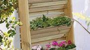 Czy miejsce w którym rosną zioła / przyprawy każdy z nas może mieć na balkonie?