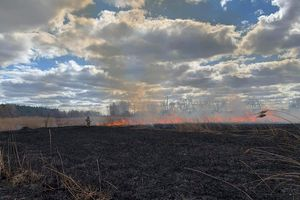 Zatrzymany za wypalanie traw przy drodze