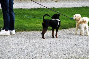 Wyższe kary dla nieodpowiedzialnych opiekunów psów. Od soboty także inne zmiany w przepisach [SONDA]