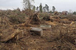 Zniszczyli cmentarz i wycieli 300 drzew!