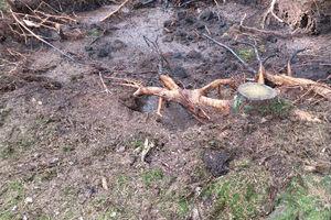 Piekąc kiełbaski spalili las...