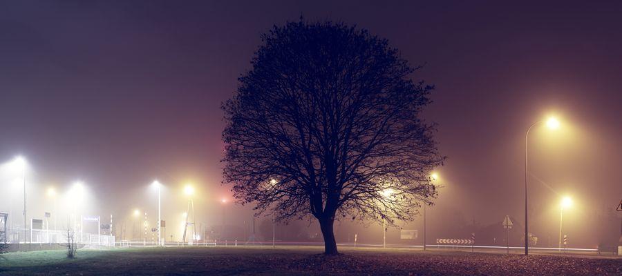 Piska za zdjęcie. Drzewo przy drodze wylotowej na Białą Piską