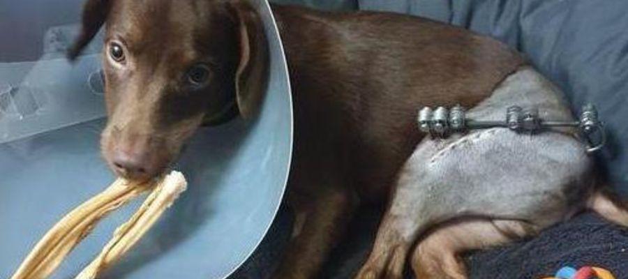 Czoko przeszedł dwie operacje, czeka go trzecia. Koszty leczenia i rehabilitacji są duże