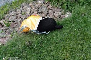 W stawie na Jarotach znaleziono martwego psa w reklamówce