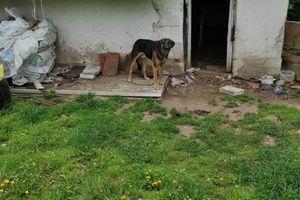 Na terenie gminy Bisztynek małżeństwo pozostawiło psy