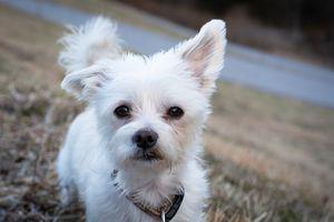 Czy powstanie wspólne schronisko dla psów z 12 samorządów?