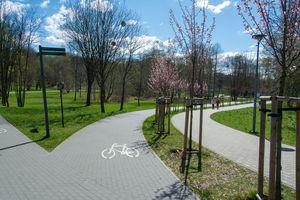 Wiosenne sadzenie i pomniki przyrody