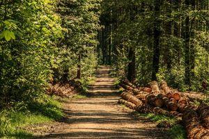 Weź pieniądze i posadź las – wkrótce ruszy nabór wniosków