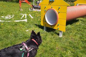 Ruszyła budowa wybiegu dla psów. Czy to koniec konfliktu?