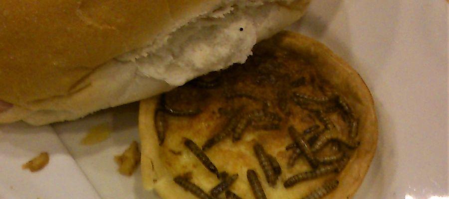 Ciastko z larwami mącznika młynarka
