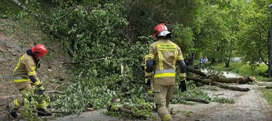 W olsztyńskim parku drzewa spadły prosto na ławkę