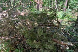 Przycinka była, drzewa zabrali, a gałęzie pozostały