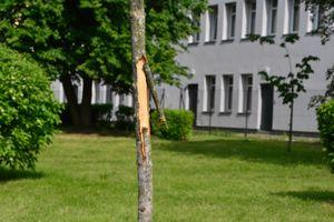 Wandale zdewastowali otoczenie nowego centrum w Barczewie. Policja szuka winnych