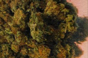 W pudełku po kanapkach ukryli blisko 20 gramów marihuany