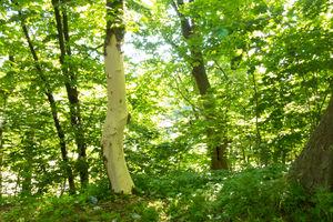 Wandale niszczą drzewa na Górze Zamkowej w Bartoszycach