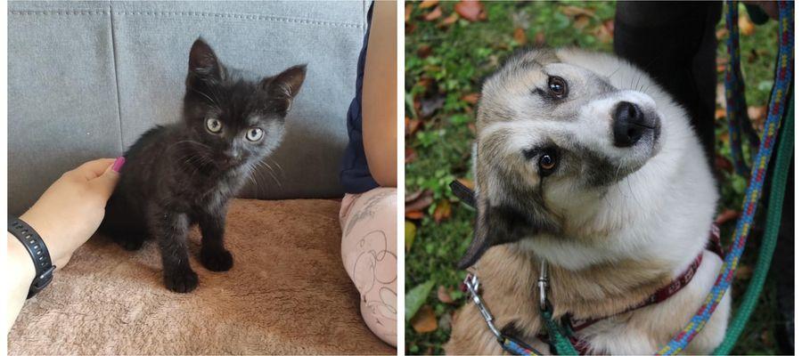 Polecają się do adopcji: Bella i Timon