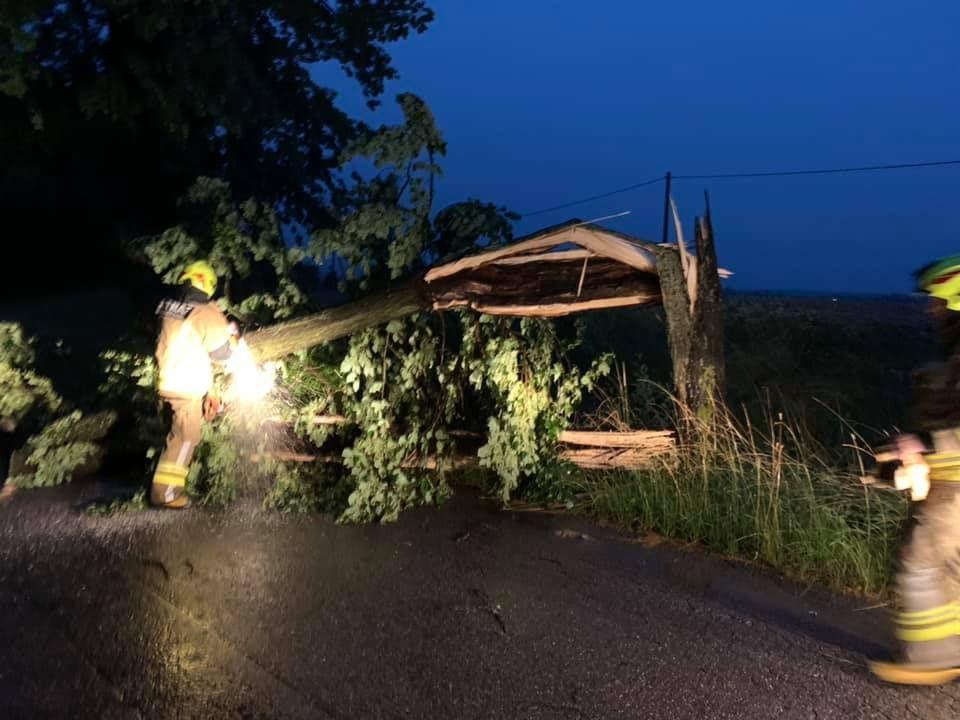 Burza powaliła wiele drzew