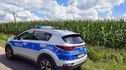 Uciekał przed policją w... pole kukurydzy
