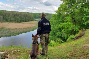 Nie każdy pies jest tylko pupilem. Czworonożni funkcjonariusze w olsztyńskich jednostkach [VIDEO][ZDJĘCIA]