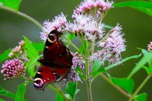 Motyle i inne owady na fotografiach. Zapraszamy do udziału w konkursie