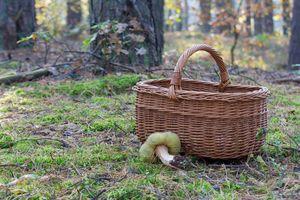 Sezon grzybowy w pełni. Jak nie zgubić się w lesie?