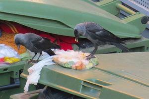 Sygnał Czytelniczki. Nie rzucajcie jedzenia na i pod śmietniki!!!