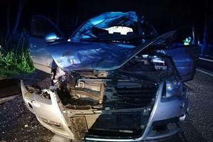 Łoś uczestnikiem wypadku drogowego [ZDJĘCIA]