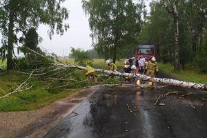 Strażacy wyjeżdżali 19 razy do powalonych drzew