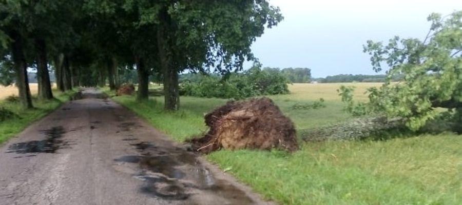 Droga Jankowice - Leszcz w gminie Dąbrówno. Burza powaliła około 20 drzew