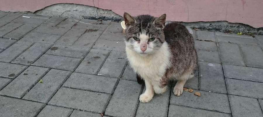 Koty niczyje — kto powinien się nimi opiekować? Urząd odpowiada: pomagamy bezdomnym, a nie wolno żyjącym