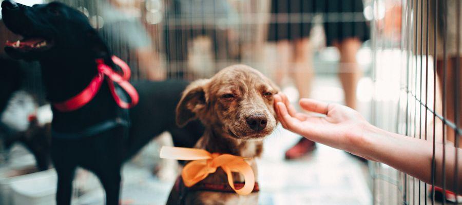 W braniewskim OTOZ Animals poszukiwani są wolontariusze i wolontariuszki