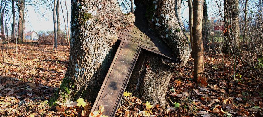 Włóczęga po cmentarzu