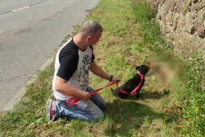 Policjant uratował potrąconego psa na drodze koło Kozłowa