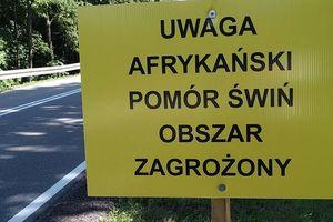 Ognisko ASF w Radomnie. Gmina Lubawa obszarem zagrożonym!