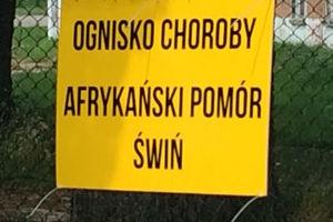 Ognisko ASF w powiecie nowomiejskim!
