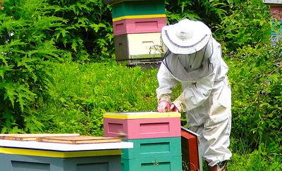 Doceńmy rolę pszczół w przyrodzie...