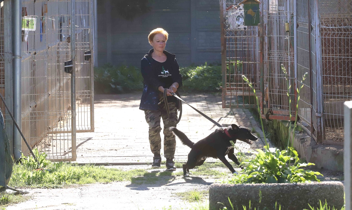 Róża Olszewska codziennie wyprowadza psy w schronisku