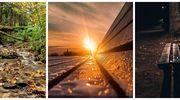 Prenumerata za zdjęcie: Las, zachód słońca i wieczór w parku