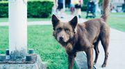 Pies bez opieki? Kara dla właściciela