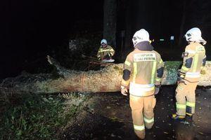 Wichura i blisko 50 interwencji strażaków [ZDJĘCIA]