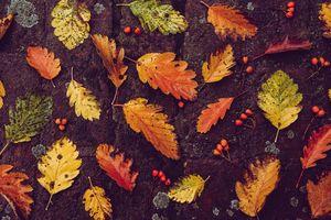 Jaką pogodą przywita nas jesień?