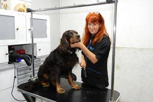 Zmieniła profesję przez psa