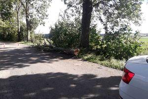 Zamknięto drogę koło Biskupca. Drzewa stanowią zagrożenie