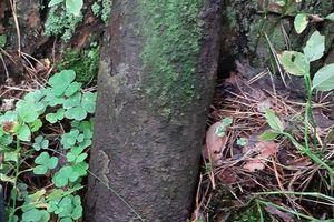 Co można znaleźć w lesie podczas grzybobrania?