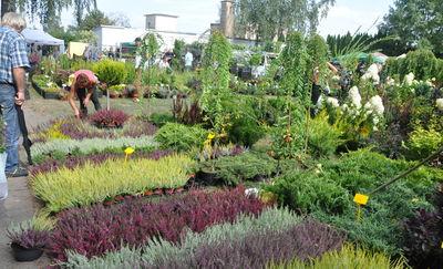Jesienne targi ogrodnicze już w ten weekend